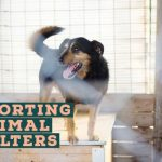 15 Ways to Support Your Local Animal Shelter